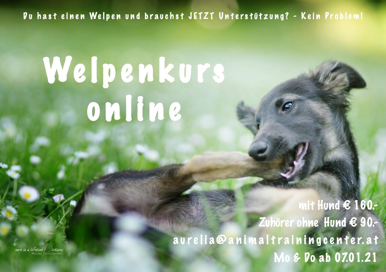 ATC-Online-Welpenkurs